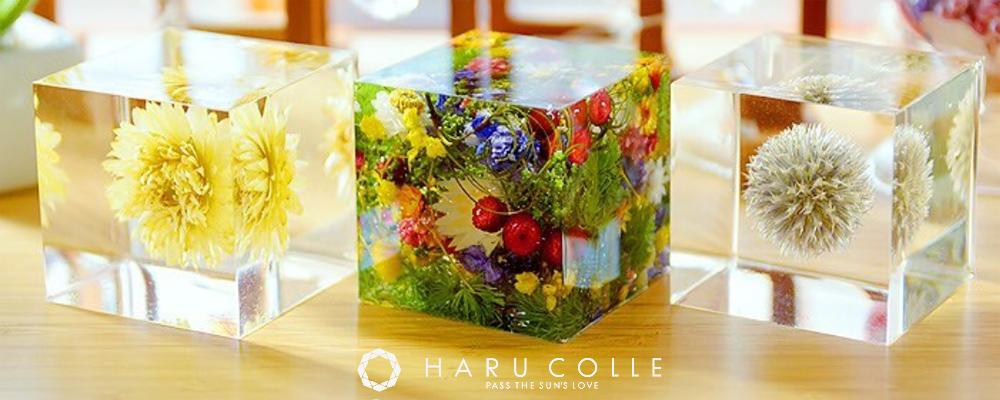 プリザーブドフラワー「HARU COLLE 認定 クリスタル・アートリウム」